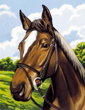 Набор для раскрашивания Лошадь Reeves