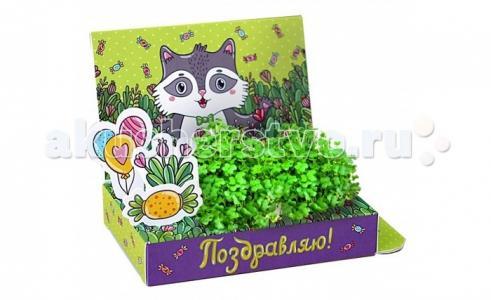 Подарочный набор Живая открытка Поздравляю! Happy Plant