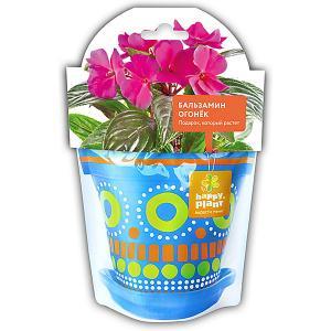 Набор для выращивания  Бальзамин огонек Happy Plant