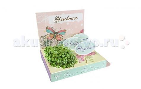 Подарочный набор С Днём рождения! Happy Plant