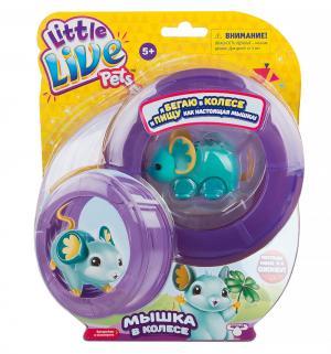 Игрушка  Little Live Pets Мышка в колесе голубая Moose