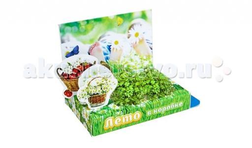 Подарочный набор Живая открытка Лето в коробке Happy Plant