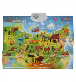 Плакат звуковой  Животный Мир России Рыжий кот