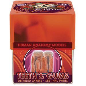 Набор для опытов  Анатомия Зубы и десна Профессор Эйн. Цвет: бежевый