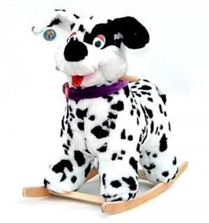 Качалка  Собака, Тутси