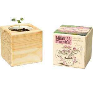Набор для выращивания Мимоза, Экокуб