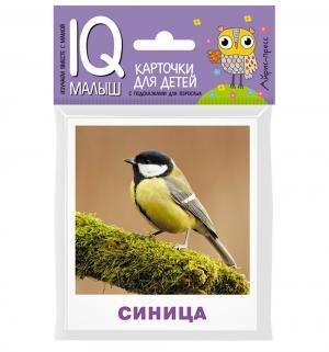 Набор карточек  Птицы 0+ Айрис-пресс