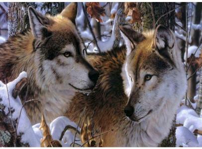 Набор для вышивания бисером Волки в зимнем лесу Color Kit